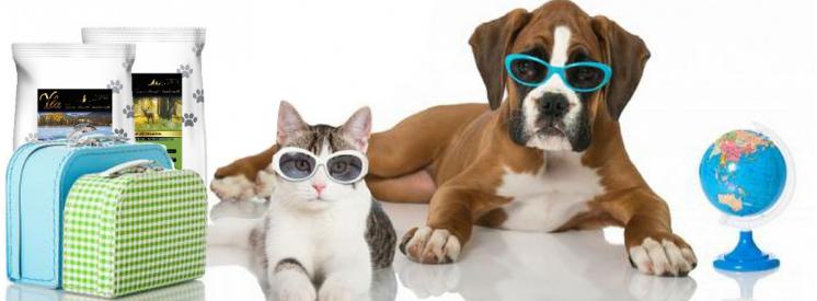 Voyager avec un chat ou un chien : combien ça va vous coûter ?